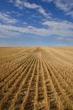 Harvested Grain Field Canadian Prairies royalty free stock photo