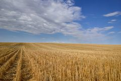 Harvested Grain Field Canadian Prairies royalty free stock image