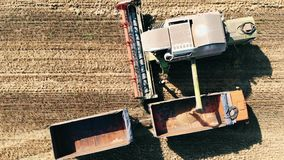 Harvested grain is pouring from the combine into the truck