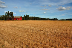 Harvested grainfield. Harvested grain field with red barn, forest and sky with clouds. Scandinavia, Finland Royalty Free Stock Images