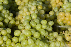 Harvested grapes on Vineyards Royalty Free Stock Images