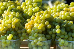Harvested grapes on Vineyards Stock Photos