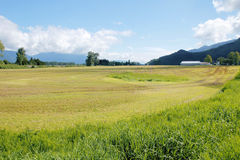 Harvested Grassland Royalty Free Stock Photography