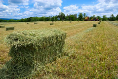 Harvested Hay Bales Royalty Free Stock Photo