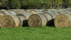 Harvested hay at the edge of the field on the farm stock photos