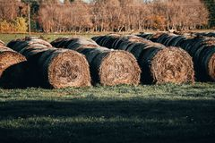 Harvested hay at the edge of the field stock image