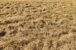 Harvested hay field Royalty Free Stock Photo