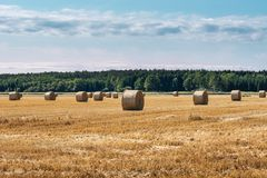 Harvested hay field with lot of round bales Stock Photo