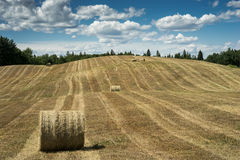 Harvested hay field Royalty Free Stock Photos