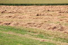 Harvested hay field in warm summer Royalty Free Stock Images