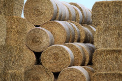 Harvested hay in Knävången, Falsterbo, Sweden Royalty Free Stock Image