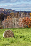 Harvested Hay Stock Images