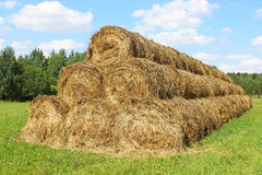 Harvested hay rolls lying on the field Royalty Free Stock Photos
