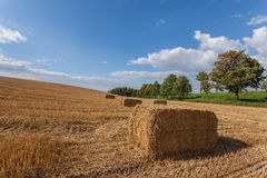 Harvested haystack in a field. Stock Photography