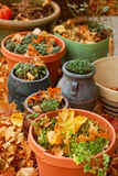 Harvested Herbs in Autumn. Pots of harvested herbs surrounded by autumn leaves Stock Images