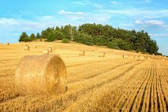 Harvested hilly wheat field Stock Images