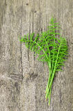 Harvested Horsetail Royalty Free Stock Image