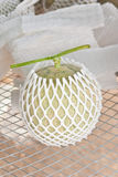 Harvested Japanese musk melon packed with protective foam net Royalty Free Stock Photo
