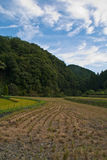 Harvested Japanese rice field Royalty Free Stock Image
