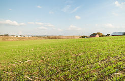 Harvested land. Stock Photography