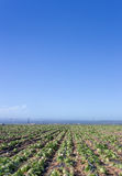 Harvested Lettuce Fields in Salinas Valley Stock Photography