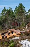 Harvested logs on background of winter pine forest. Harvested logs on background of Red Scandinavian house in an winter pine forest Stock Image