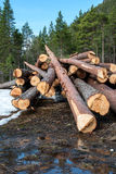 Harvested logs Royalty Free Stock Image