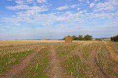 Harvested oilseed rape field Royalty Free Stock Image