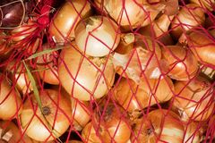 Harvested onion Stock Images