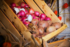 Harvested onion, garlic and potatoes Stock Images