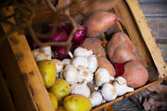 Harvested onion, garlic and potatoes Royalty Free Stock Photography