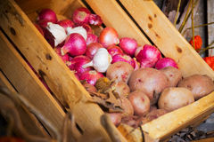 Harvested onion and potatoes Royalty Free Stock Photo