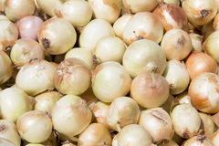 Harvested onion on sacking. Close up of harvested onion on sacking Stock Photo