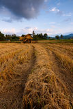 Harvested paddy field at Sabah, East Malaysia, Borneo Stock Photography
