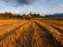 Harvested paddy field at Sabah, East Malaysia, Borneo Royalty Free Stock Photos