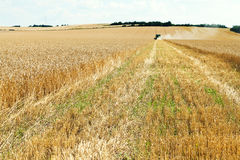 Harvested part in wheat plantation Royalty Free Stock Photography