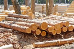 Harvested Pine Logs At The Site Of Timber Processing Royalty Free Stock Photography
