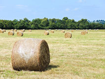 Harvested plantation with haystack rolls. In Normandy, France stock image