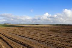 Harvested potato field Stock Photos