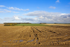 Harvested potato field with puddles Royalty Free Stock Photos