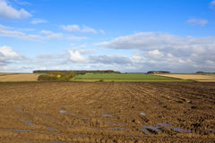 Harvested potato field Stock Photography