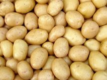 Harvested potato tubers Royalty Free Stock Photography