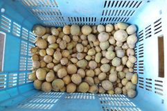 Harvested Potatoes. Many freshly harvested potatoes in the case Royalty Free Stock Photography