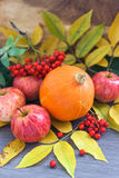 Harvested pumpkin, apples, ashberry and fall leaves around Royalty Free Stock Photography