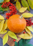 Harvested pumpkin with ashberry and fall leaves around Royalty Free Stock Image