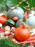 Harvested pumpkins Stock Image
