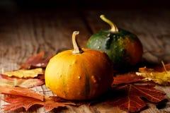 Harvested pumpkins Stock Photos