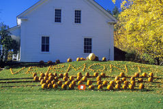 Harvested pumpkins along Scenic Route 100 in autumn, VT Stock Photography
