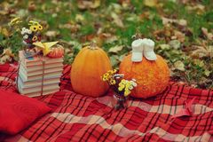 Harvested pumpkins with fall leaves Stock Photos