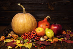 Harvested pumpkins with fall leaves and autumn fruit, gifts of a Stock Photo